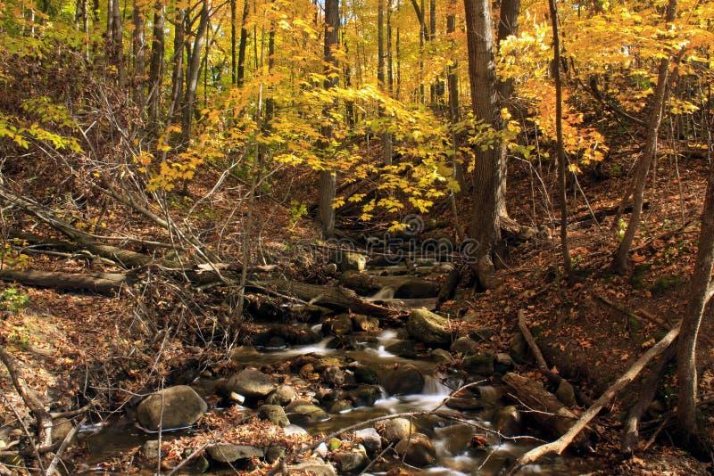 Kreek in het bos van de Herfst stock foto
