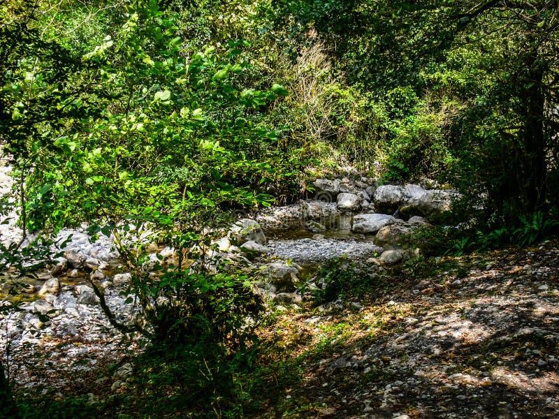 Kreek in het groene bos royalty-vrije stock foto