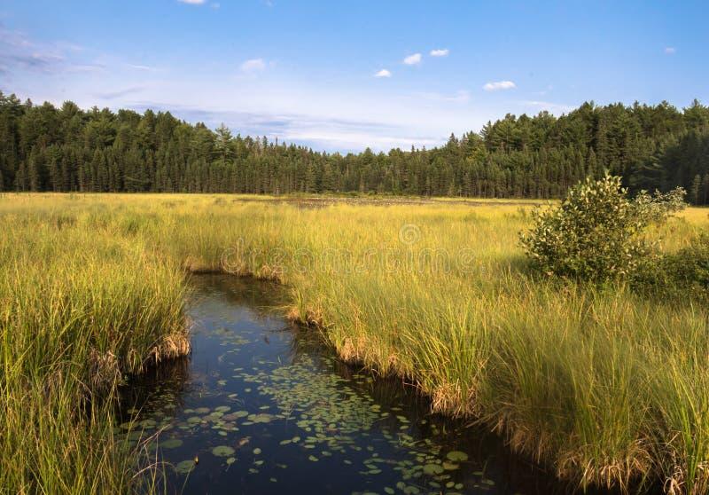 Kreek in het moeras in Algonquin Park stock fotografie