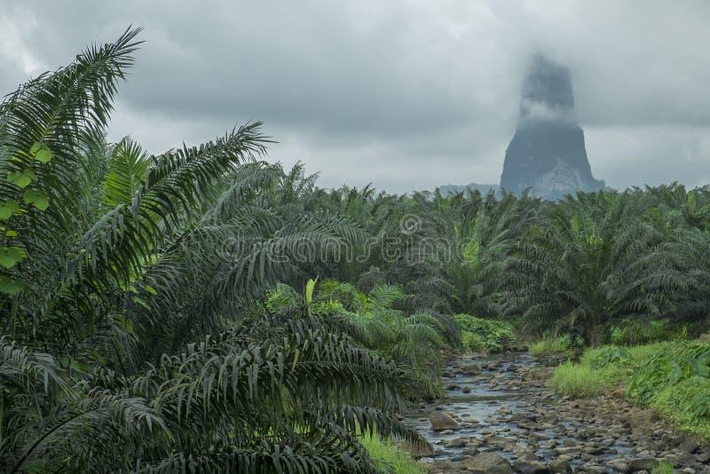 Kreek op het tropische Eiland Sao Tomé royalty-vrije stock foto