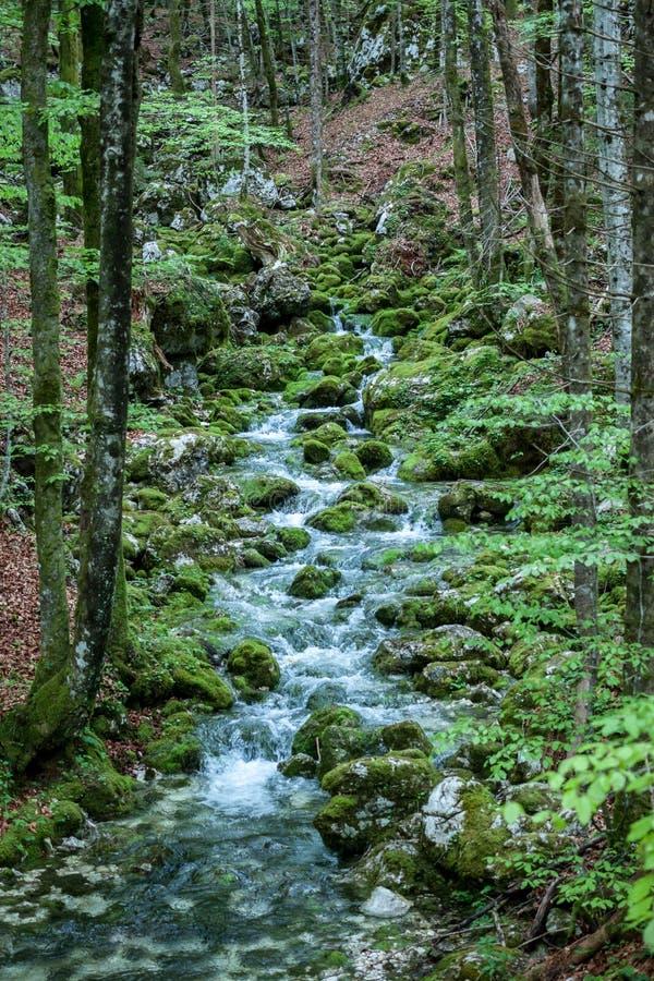 Kreek tussen stenen met groen mos worden behandeld dat stock foto