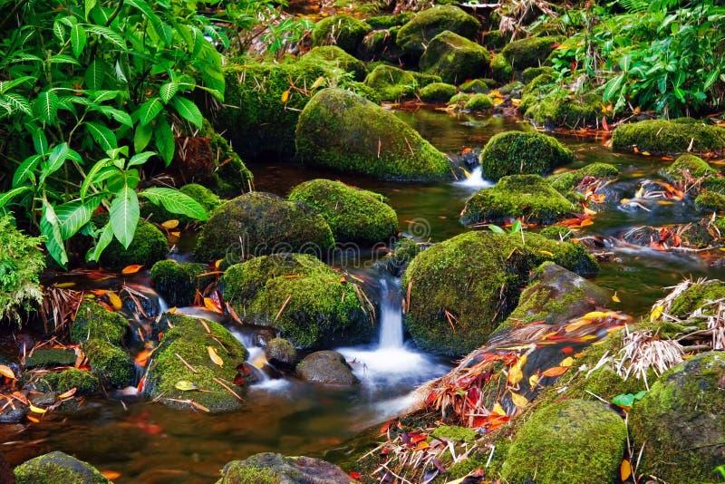 Kreek in wildernis van Hawaï stock fotografie