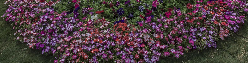 Kreis - Gruppe der Blumen-Fahne stockfotografie