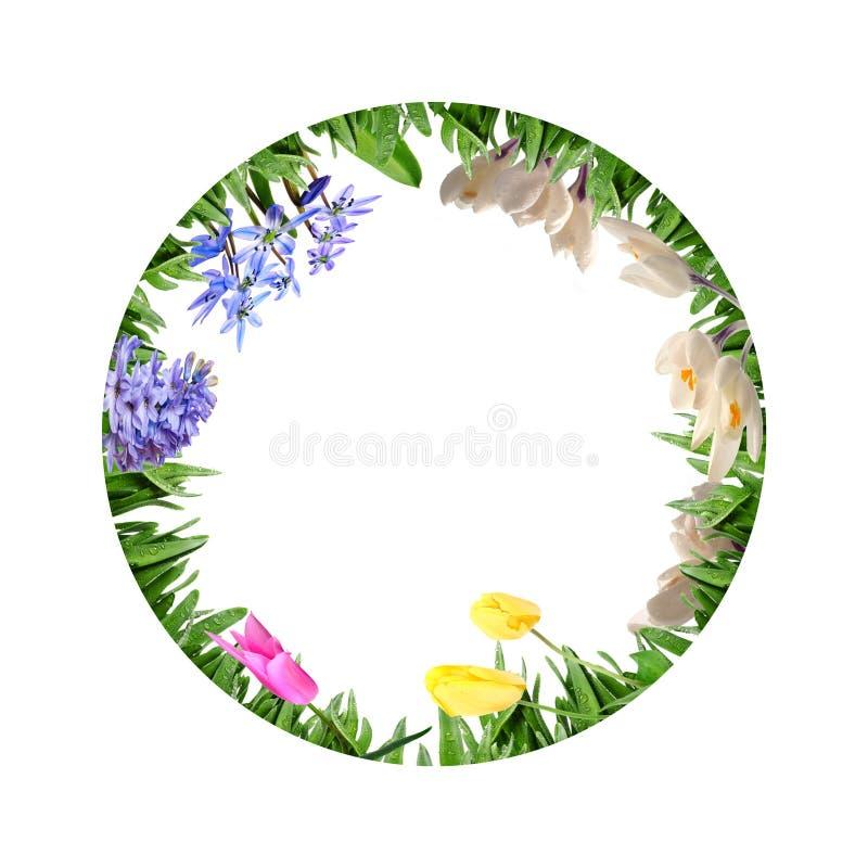 Kreis von den Blumen im Gras stock abbildung