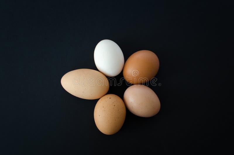 Kreis von Eiern stockfotos