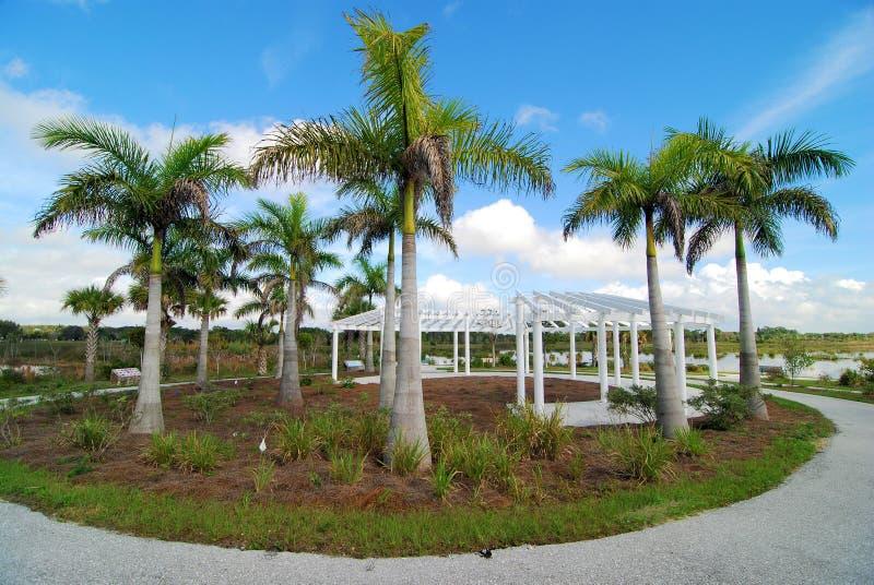 Kreis von Palmen stockbilder