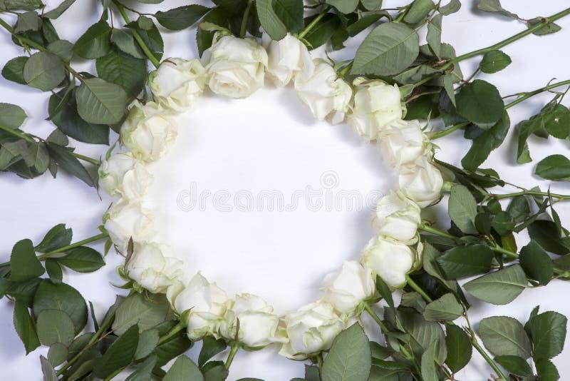 Kreis zeichnete mit weißen Rosen auf einem weißen Hintergrund Idee für Design lizenzfreie stockfotos