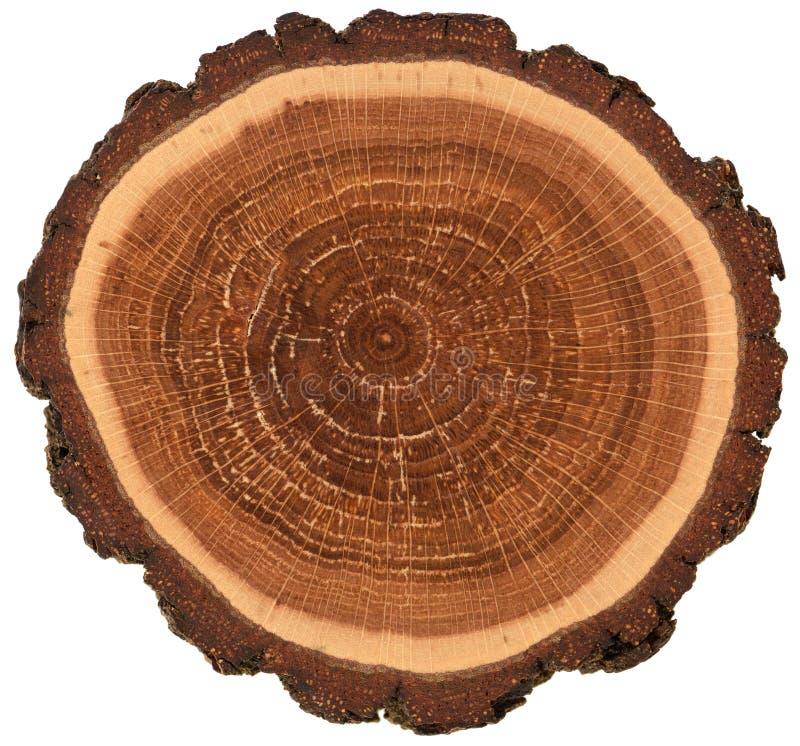 Kreisförmige hölzerne Platte mit Barken- und Wachstumsringen Bunte Eichenscheibenbeschaffenheit lokalisiert auf weißem Hintergrun lizenzfreies stockbild