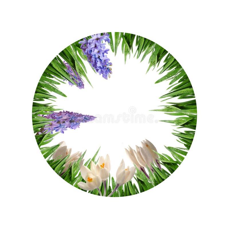 Kreisgrenze von den Gras- und Frühlingsblumen stockbilder