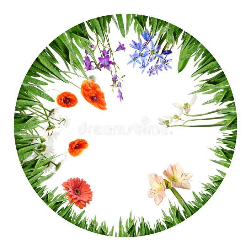 Kreisgrenze von den Gras- und Frühlingsblumen stockfotos