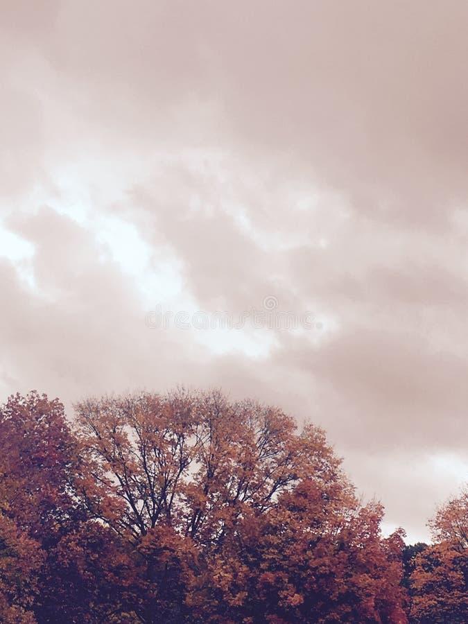 Kremowy niebo zdjęcie royalty free