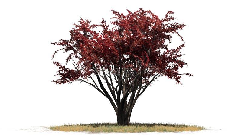 Krepp Myrte Busch im Herbst vektor abbildung