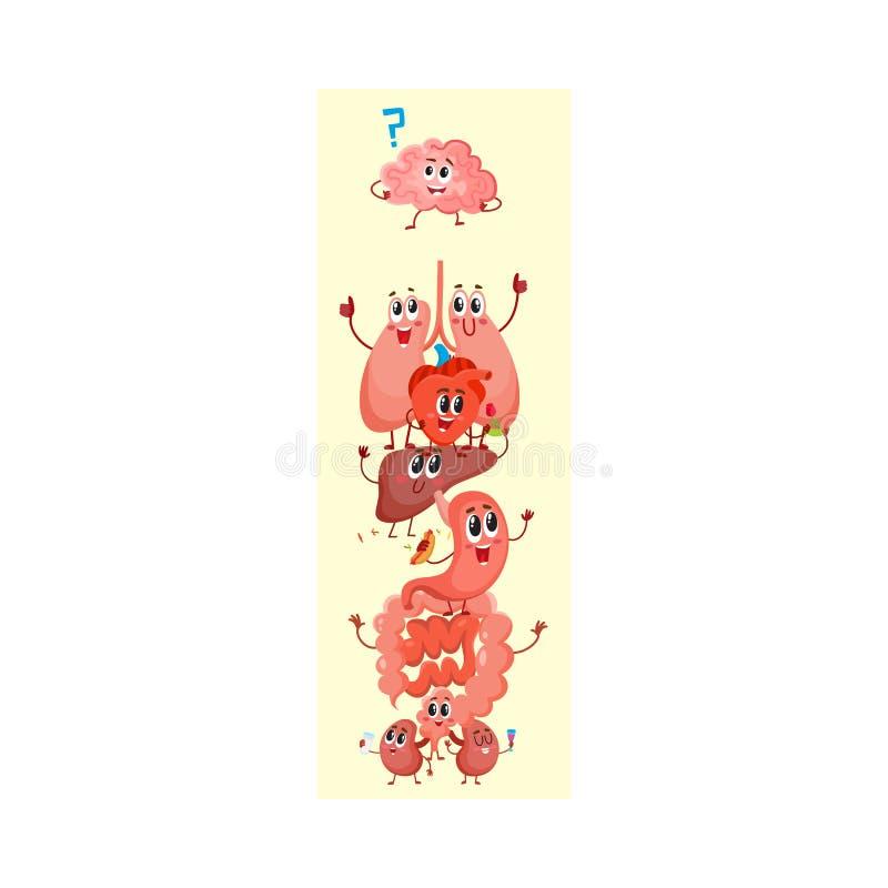 Kreskówka diagram ludzka anatomia, śmieszni wewnętrznego organu charaktery ilustracji