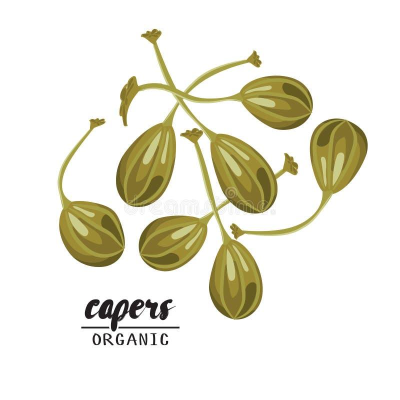 Kreskówka kapary Dojrzały zielony warzywo Jarosz wyśmienicie Eco żywność organiczna Płaski wektorowy projekt na białym tle, royalty ilustracja