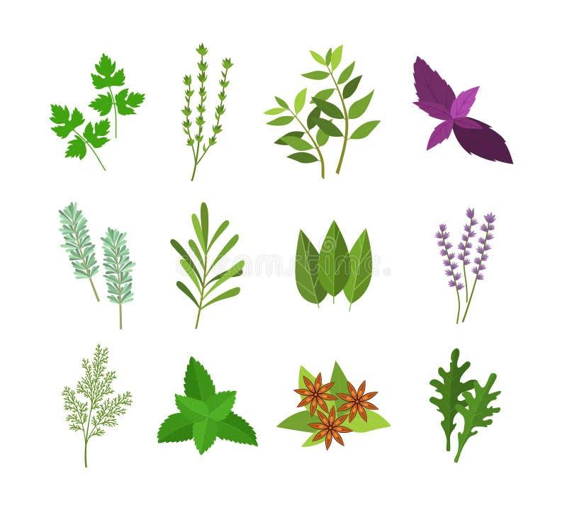 Kreskówka koloru ziele pikantność Ustawiać wektor ilustracji