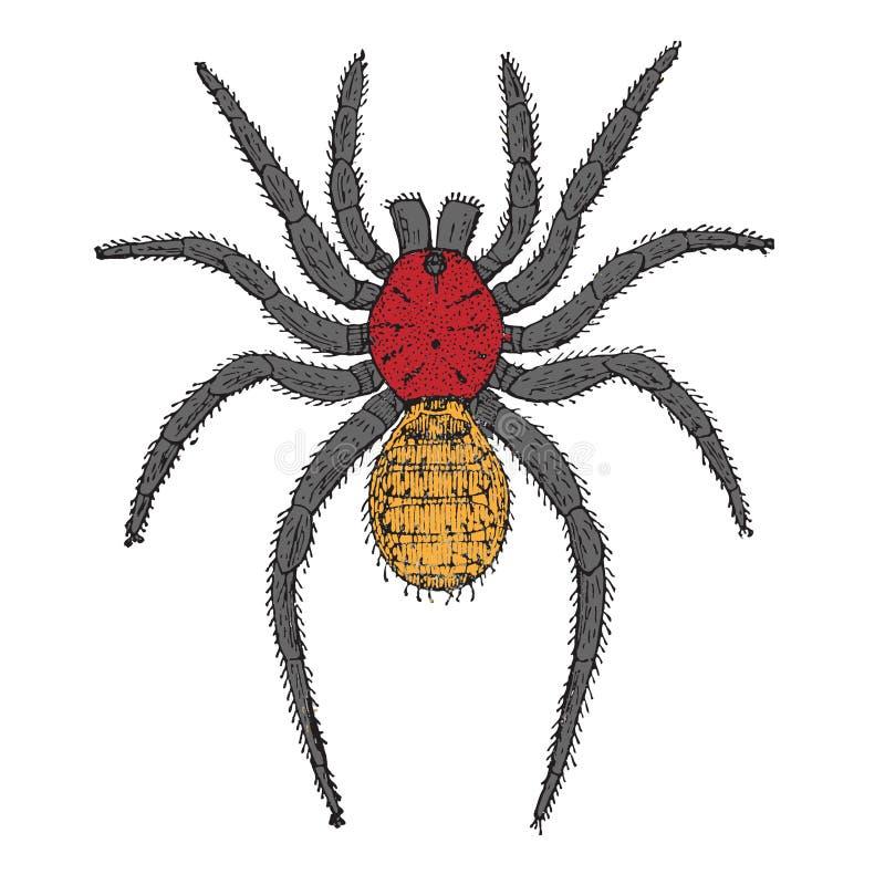 kreskówka pająk ilustracja wektor