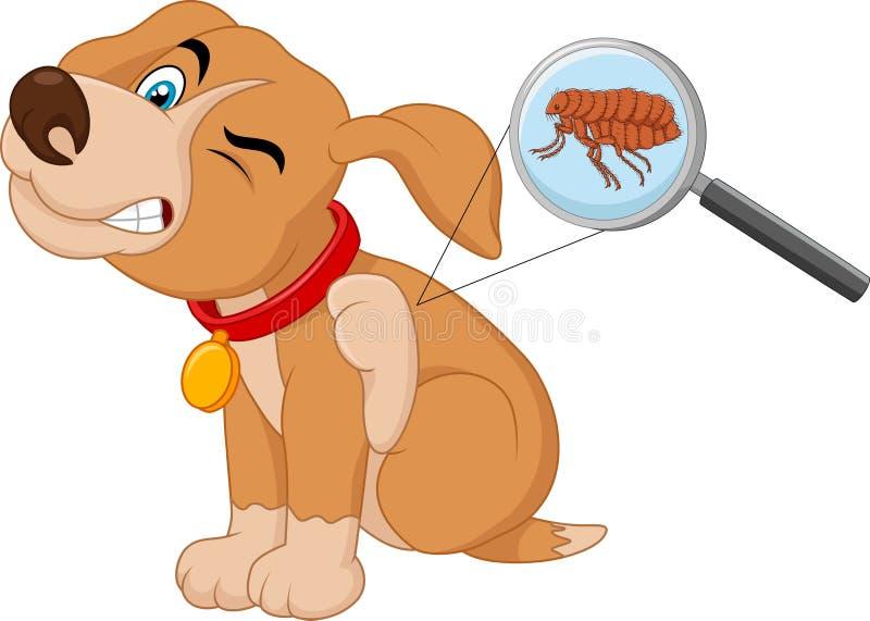 Kreskówka pchła atakujący pies ilustracji