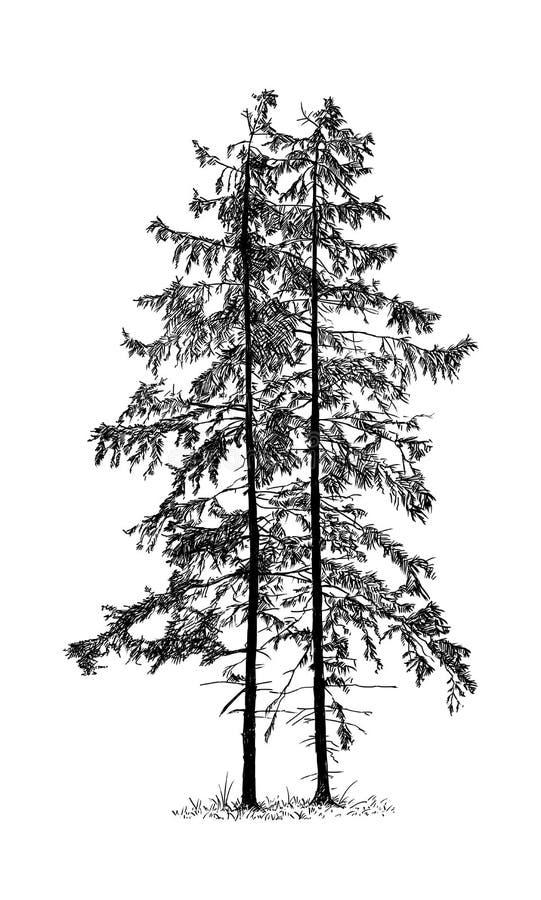 Kreskówka rysunek Świerkowy Conifer drzewo royalty ilustracja