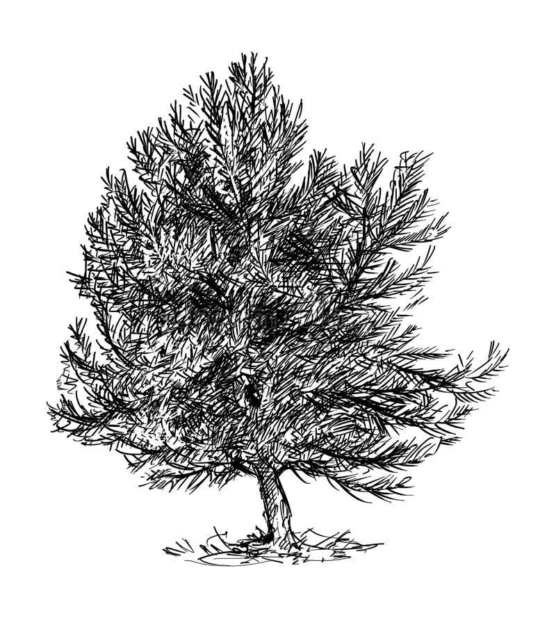 Kreskówka rysunek Mały Sosnowy Conifer drzewo ilustracja wektor