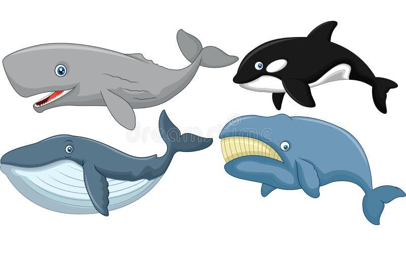 Kreskówka wieloryba kolekcja ilustracji