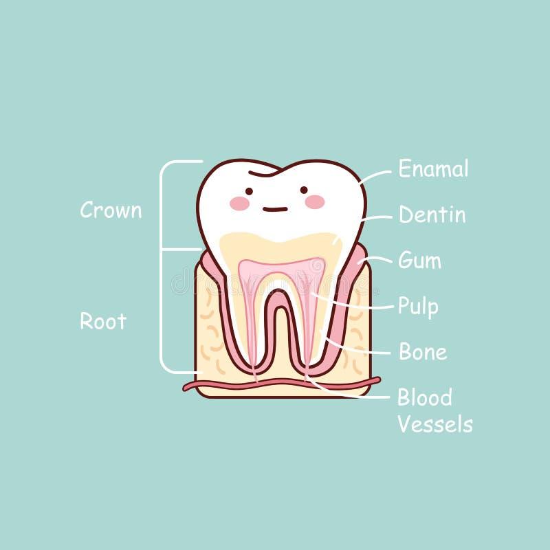 Kreskówka zębu anatomii mapa royalty ilustracja