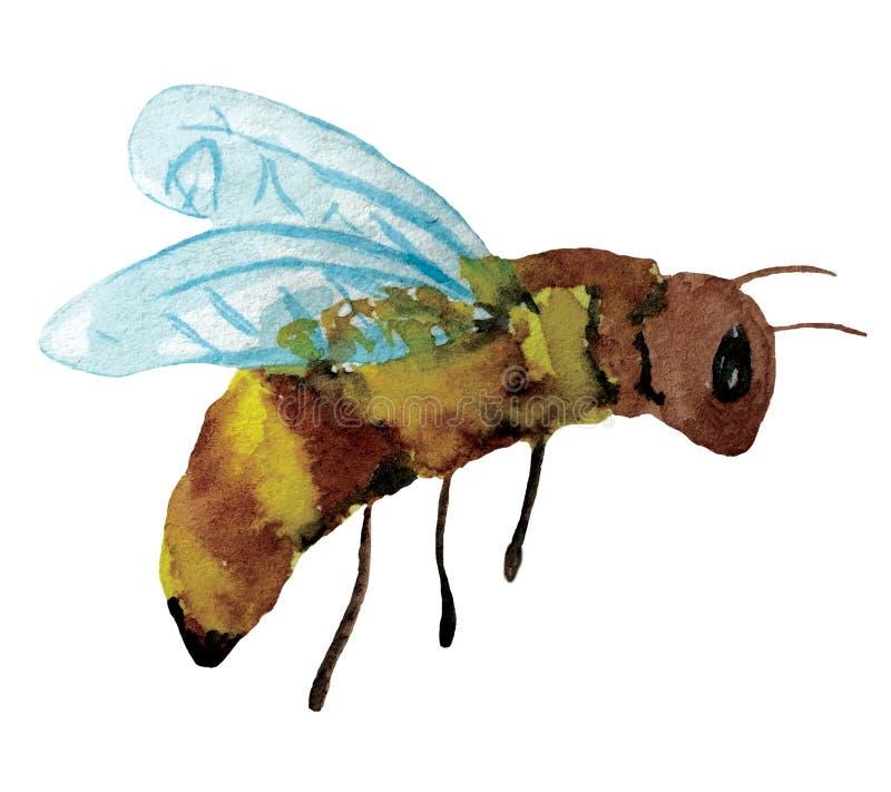 kreskówki śmieszna pszczoła beak dekoracyjnego latającego ilustracyjnego wizerunek swój papierowa kawałka dymówki akwarela ilustracja wektor