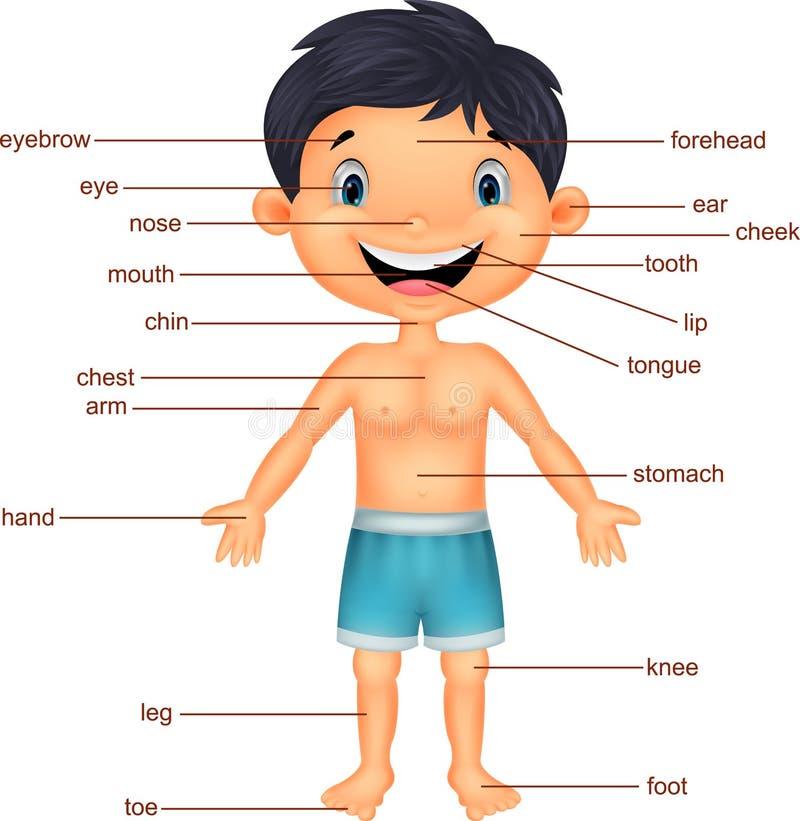 Kreskówki chłopiec słownictwa część ciało royalty ilustracja