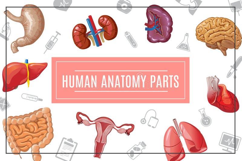 Kreskówki ciała ludzkiego organów pojęcie ilustracji