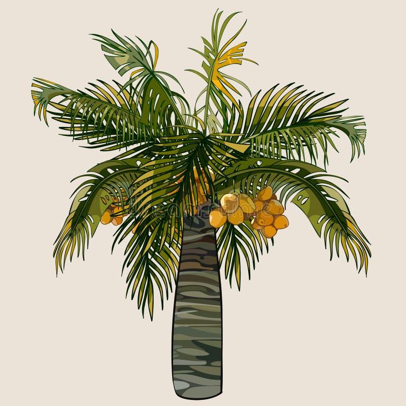 Kreskówki drzewko palmowe z koks ilustracja wektor