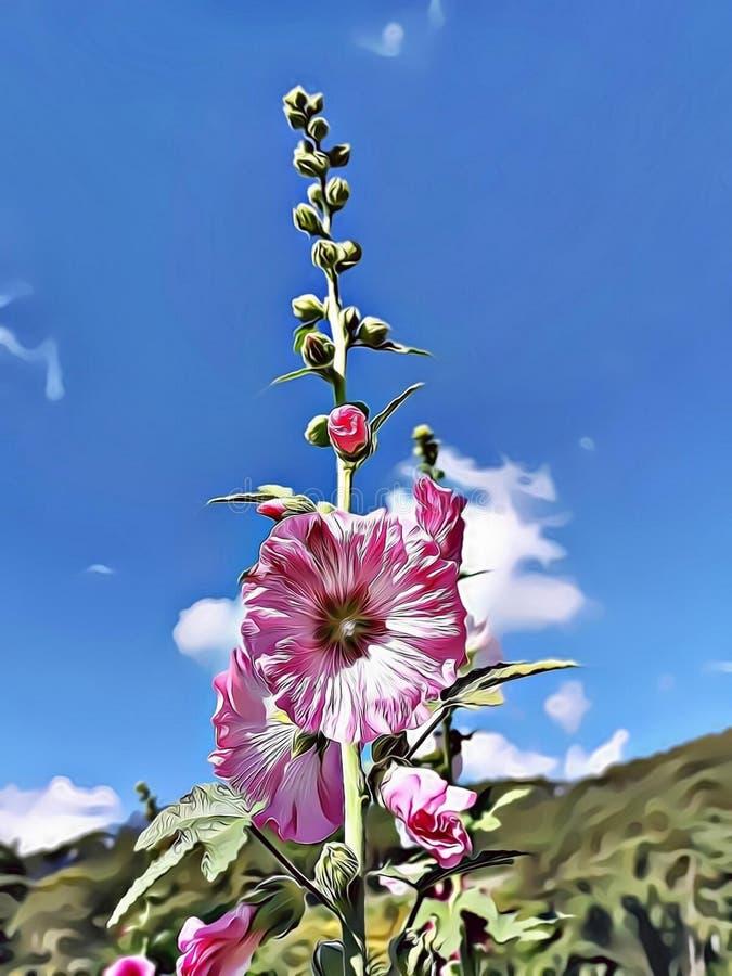 Kreskówki ilustracja zadziwiające menchie kwitnie z niebieskiego nieba tła symbolem nadzieja, wolność i czystość, fotografia stock