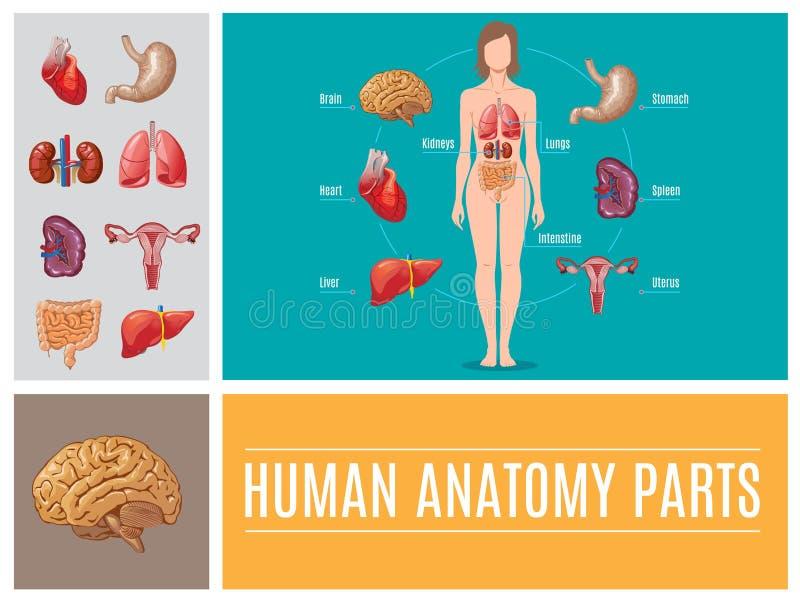 Kreskówki Ludzka anatomia Rozdziela pojęcie ilustracji