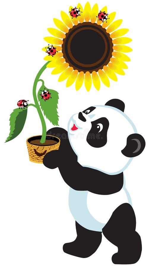 Kreskówki panda trzyma słonecznika ilustracja wektor
