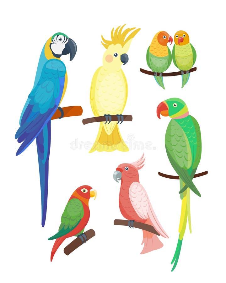 Kreskówki tropikalnego papuziego dzikiego zwierzęcia przyrody piórka zoo koloru ptasia wektorowa ilustracyjna natura żywa ilustracji
