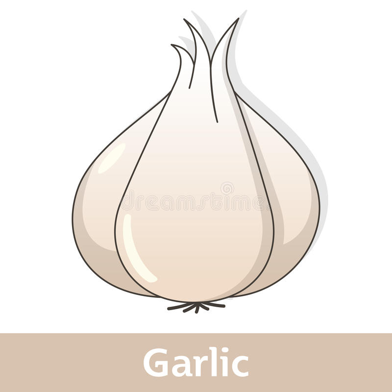 Kreskówki warzywo - Biały czosnek royalty ilustracja