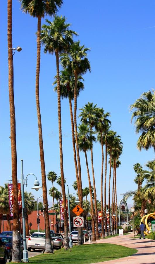 kreskowi drzewka palmowe zdjęcia stock