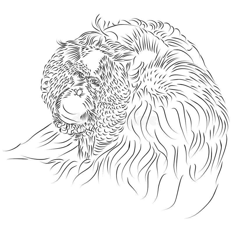 Kreskowy rysunek Pongo pygmaeus, Bornean Orangutan, prymas ilustracji