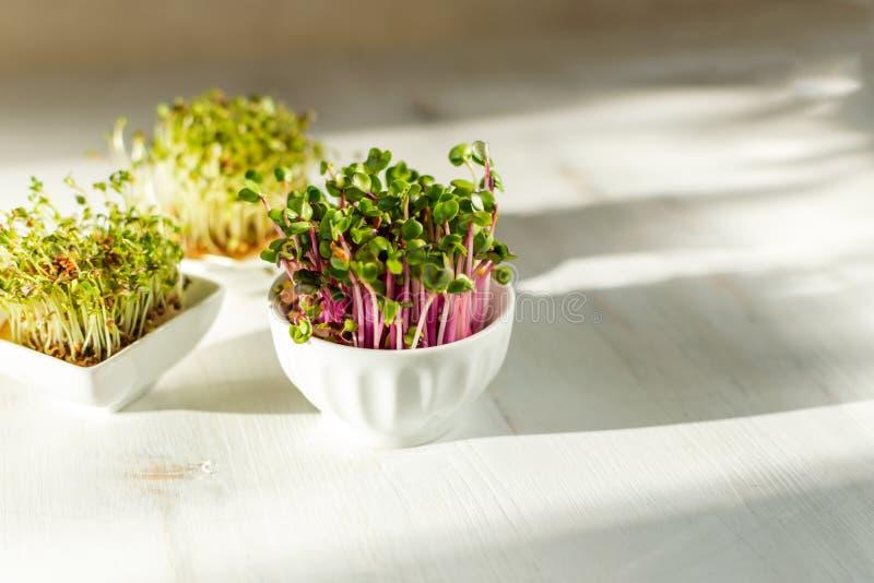 Kress di Microgreen, germogli rosa su fondo di legno bianco alla luce solare diretta dura d'avanguardia, ombre profonde, spazio d fotografia stock libera da diritti