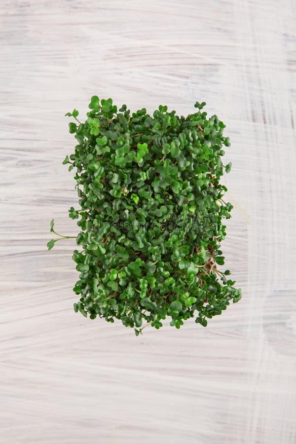 Kress frescos do jardim prontos para colher para o salat na madeira branca foto de stock