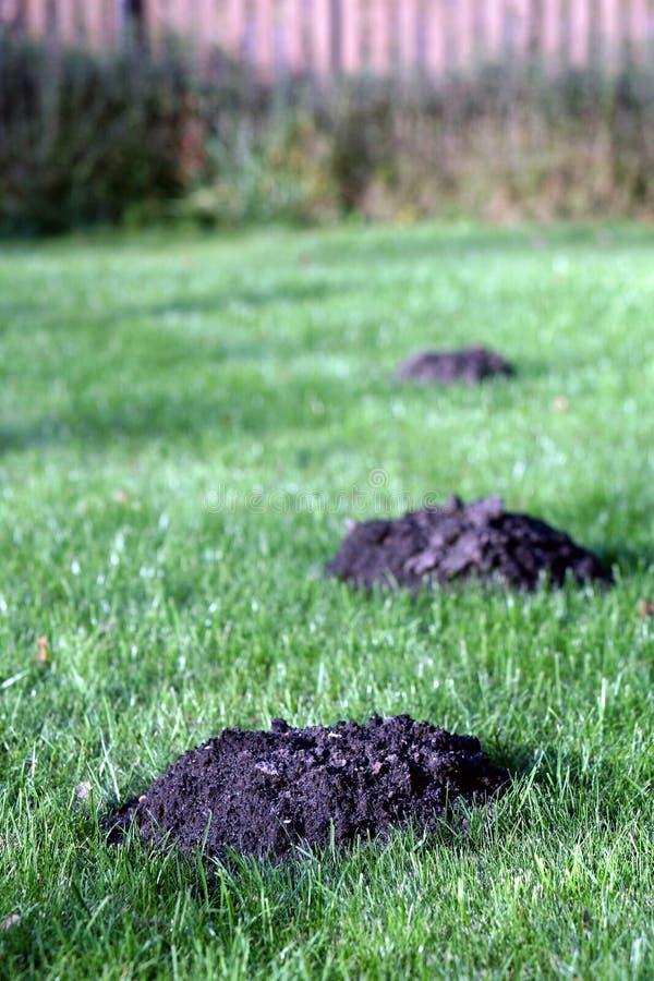 Kretowiska w ogródzie zdjęcie stock