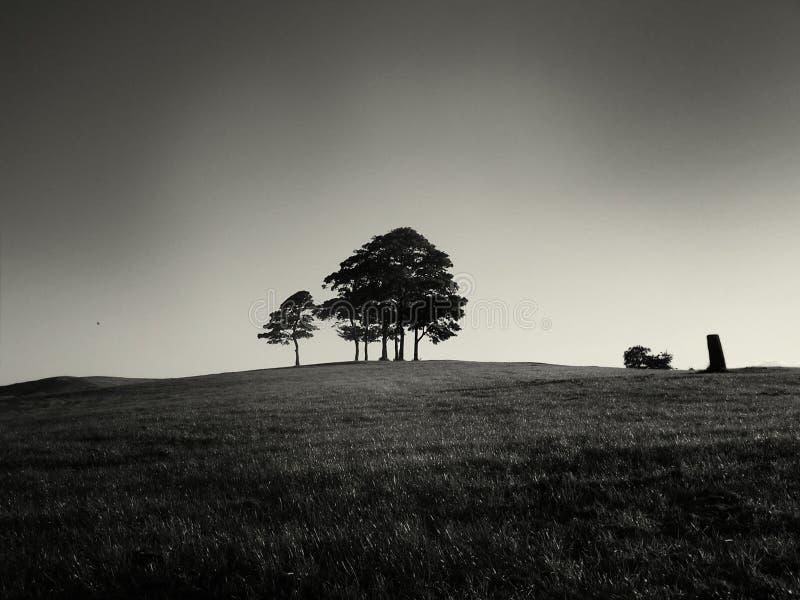 Kreupelbosje van Bomen royalty-vrije stock fotografie