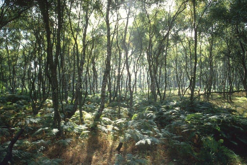 Kreupelhout stock afbeeldingen