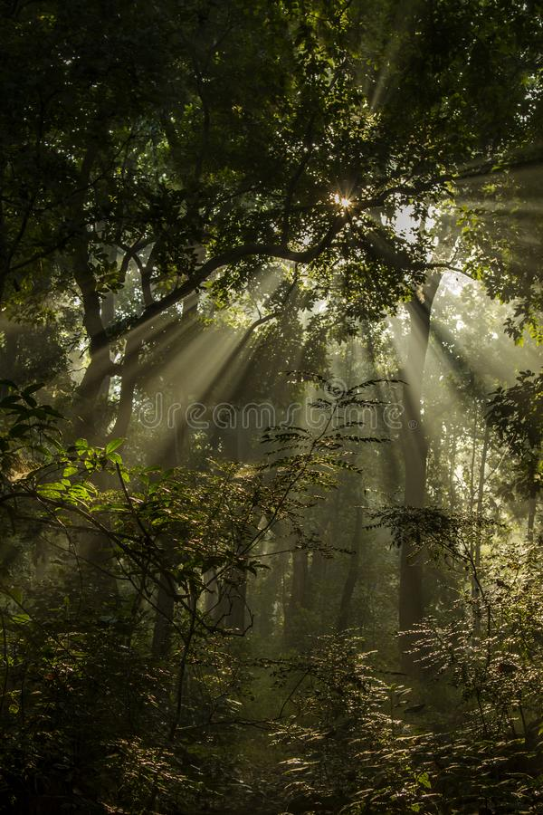 Kreupelhout en stralen van zon in het Nationale Park van Bardia, Nepal royalty-vrije stock fotografie