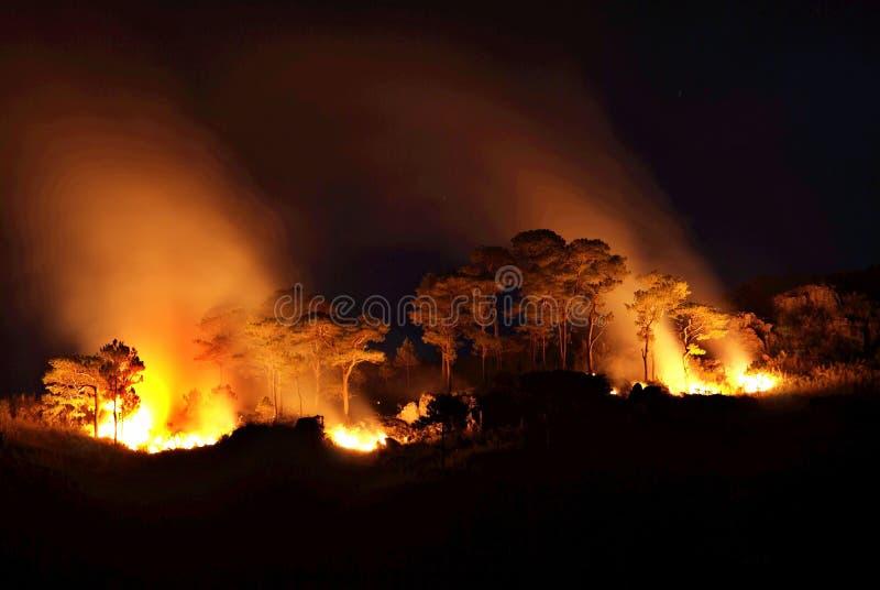 Kreupelhoutbranden stock foto