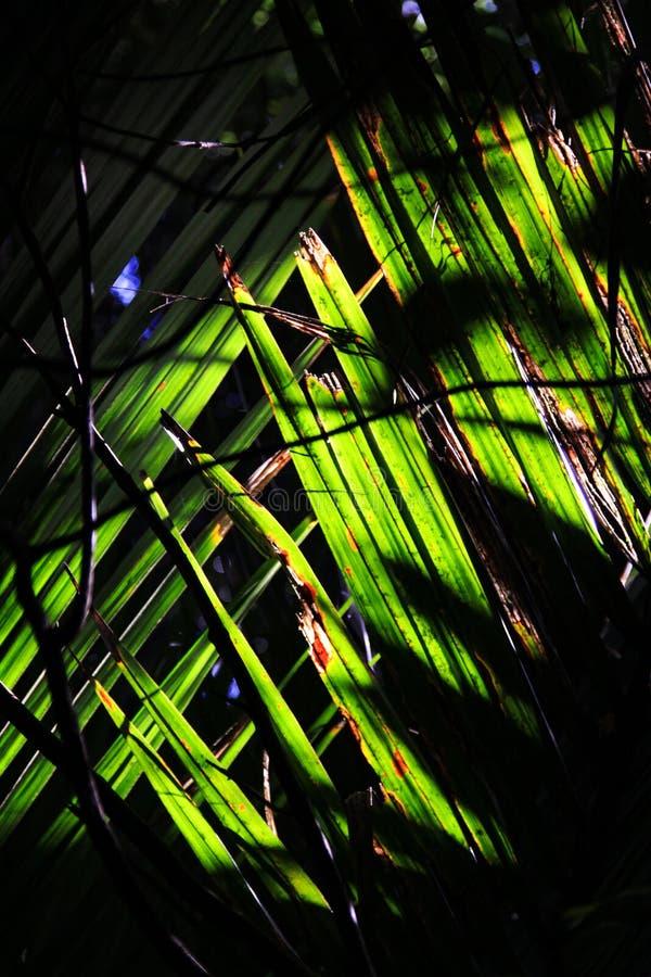 Kreuz von den Blättern lizenzfreie stockfotografie