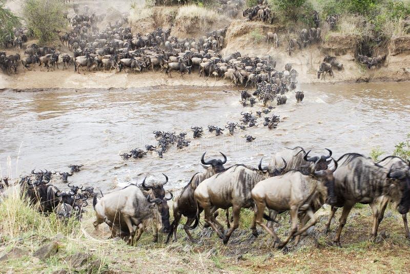 Kreuzung des Mara lizenzfreie stockbilder