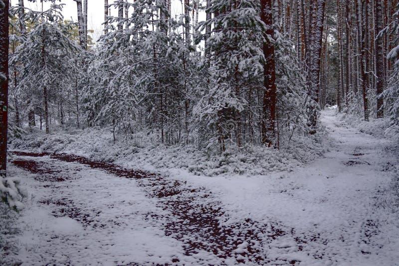 Kreuzungen, Kiefern, piceas - Winterzeit lizenzfreie stockbilder