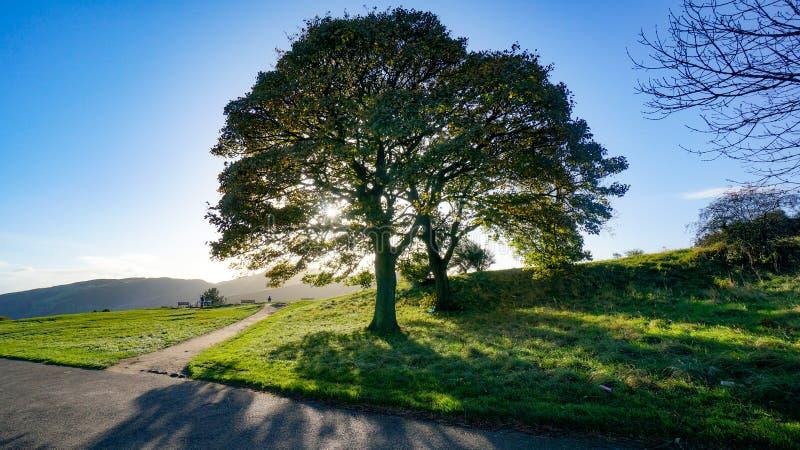 Kreuzungen mit der Sonne, die durch Baum scheint stockfotografie