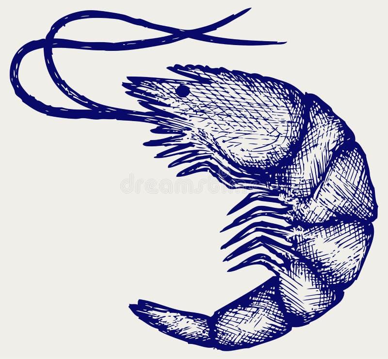 krewetka gotowana ilustracja wektor