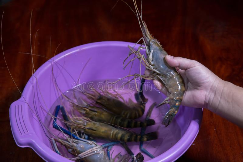krewetkowy aquaculture wysyłający za wielkiej białej garneli, ekonomiczny, fotografia royalty free