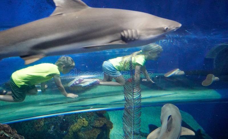 Kriechende Kinder in einem Glasrohr unter einem Haifisch lizenzfreies stockfoto